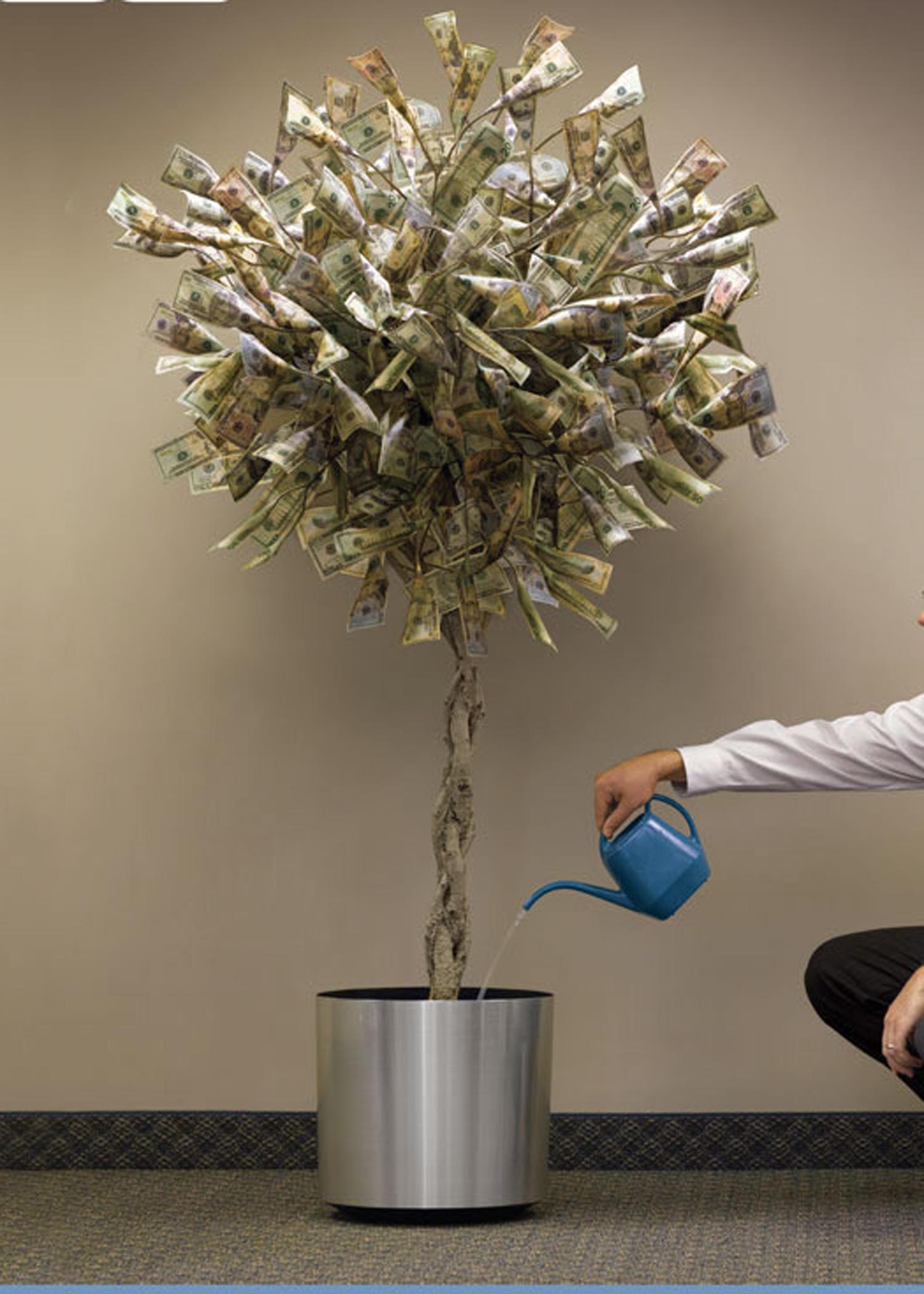 Money Tree 11