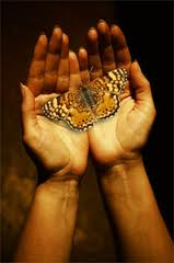 hands & butterfly